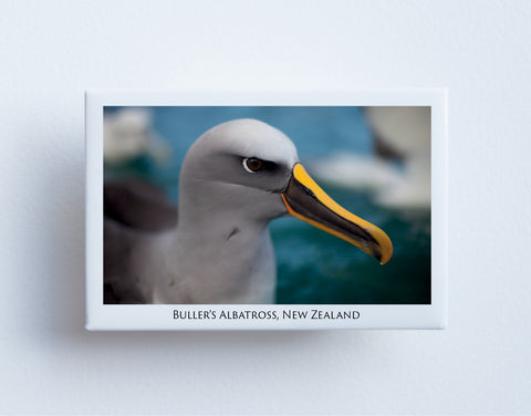 FM0083 - Post Art Magnet - Bullers Albatross
