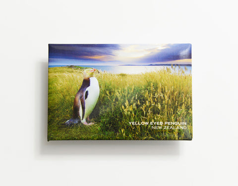 MTS1044 - Sisson Magnet - Yellow Eyed Penguin (Clouds)