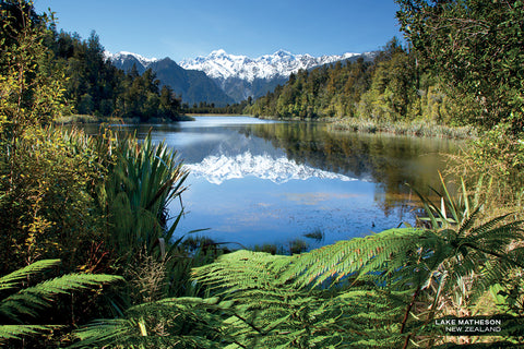 PCL1119 - Sisson Postcard - Lake Matheson - Ferns