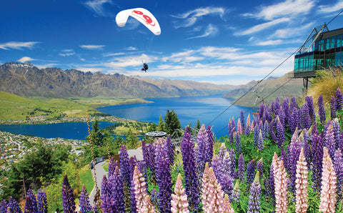 PCL1070 - Sisson Postcard - Skyline Lupins