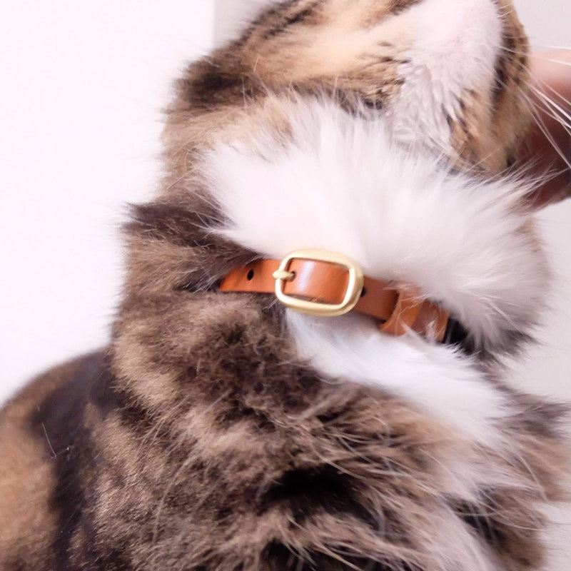 """I'm not lazy I just sleep before I get tired"" Cat Collar"