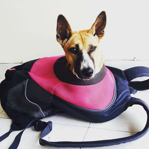 Sari the Bali dog travel bag backpack with adjustable shoulder and waist straps. Perfect for hiking, travelling, riding the train, scooter or bicycle