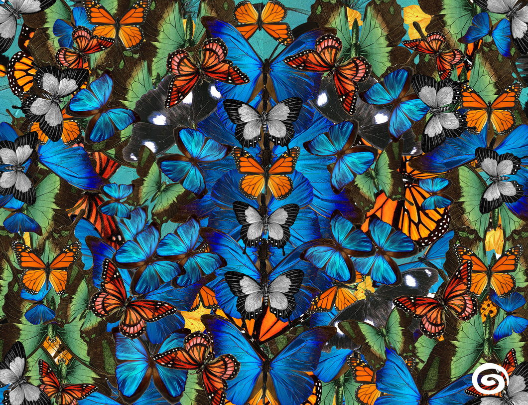 Cyclades Pareo - Exotic Butterflies