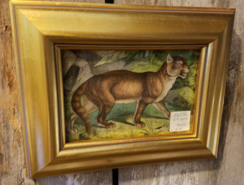 Antique animal print from Mill House Antiques