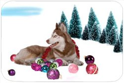 Siberian Husky Tempered Large Cutting Board Christmas