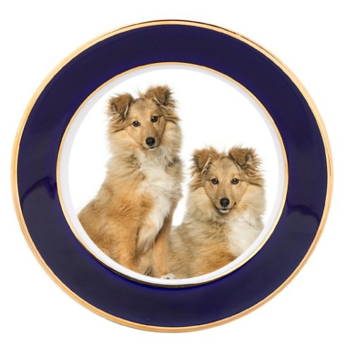 Two Border Collie Sitting Dog Porcelain Plate