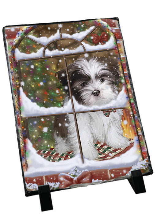 Please Come Home For Christmas Malti Tzu Dog Sitting In Window Sitting Photo Slate SLT57557