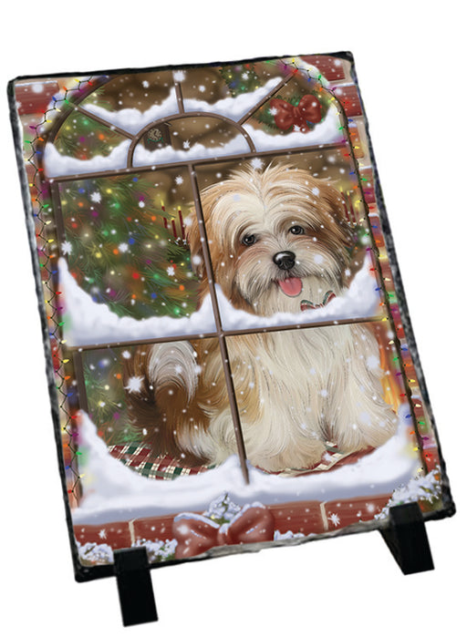 Please Come Home For Christmas Malti Tzu Dog Sitting In Window Sitting Photo Slate SLT57559