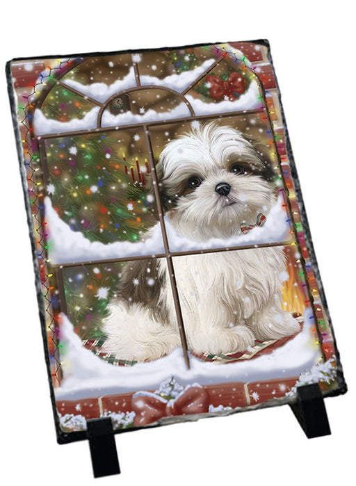 Please Come Home For Christmas Malti Tzu Dog Sitting In Window Sitting Photo Slate SLT57560