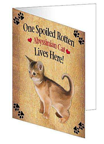 Abyssinian Kitten Spoiled Rotten Cat Greeting Card