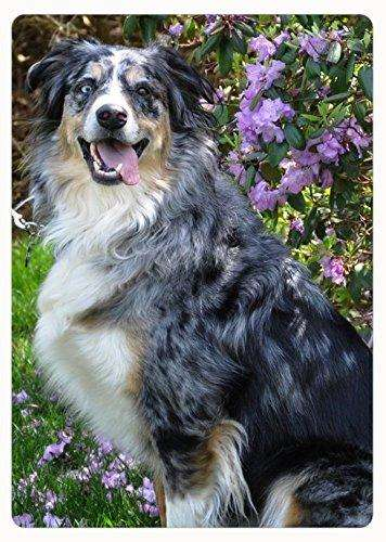 Australian Shepherd Blue Merle Cutting Board