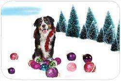 Bernese Mountain Dog Tempered Cutting Board Christmas