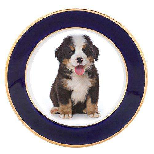 Bernese Mountain Puppy Dog Porcelain Plate