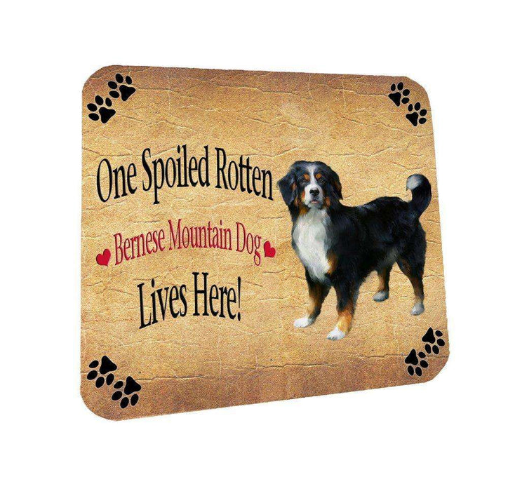 Bernese Mountain Spoiled Rotten Dog Coasters Set of 4