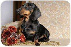 Dachshund Tempered Cutting Board