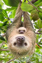Sloth with baby sloth