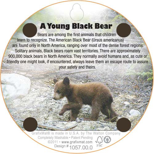 Coaster - A Young Black Bear - Cork
