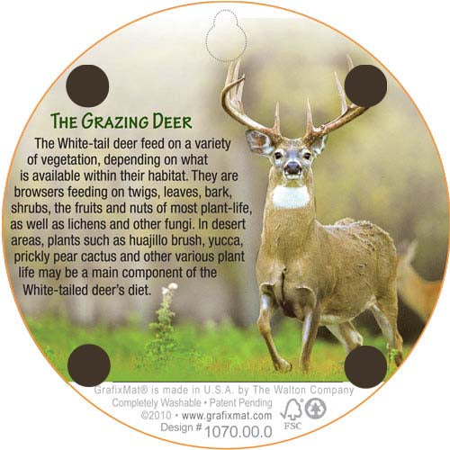 Coaster - White Tailed Deer Grazing - Cork