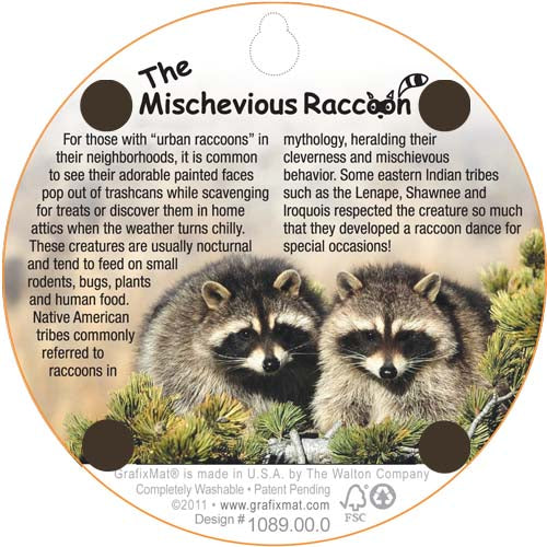 Coaster - The Mischievous Raccoon - Cork