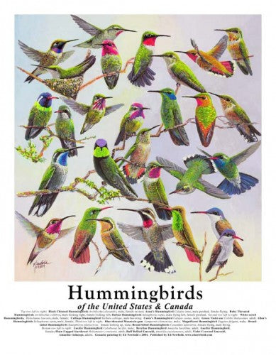 Print - Hummingbirds of the U.S.