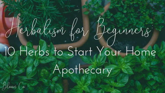 Herbalism for Beginners: 10 Herbs to Start Your Home Apothecary