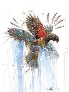 Rachel Walker Alpine Parrot Kea Limited Edition Print