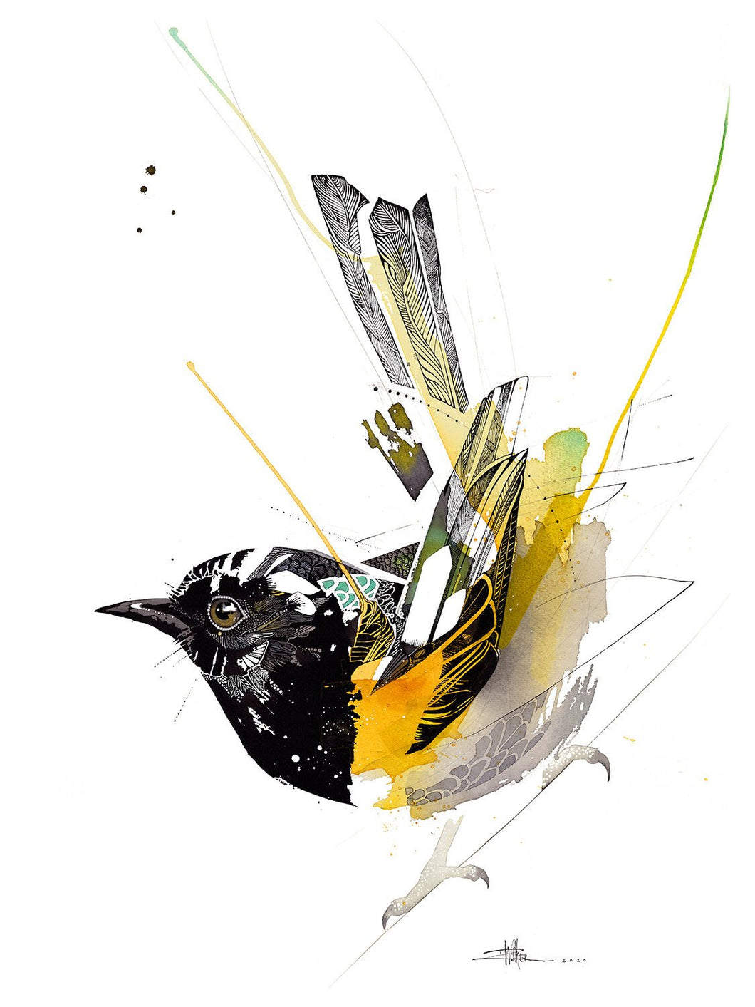 Rachel Walker - Black Ink Hihi Limited Edition Print