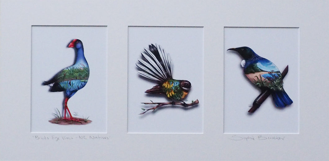 Sophie Blokker NZ Native Bird Print Triptych - Pukeko, Fantail, Tui