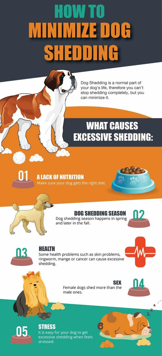 How to minimize dog shedding