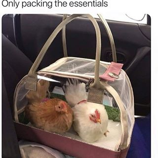 packing the essentials meme
