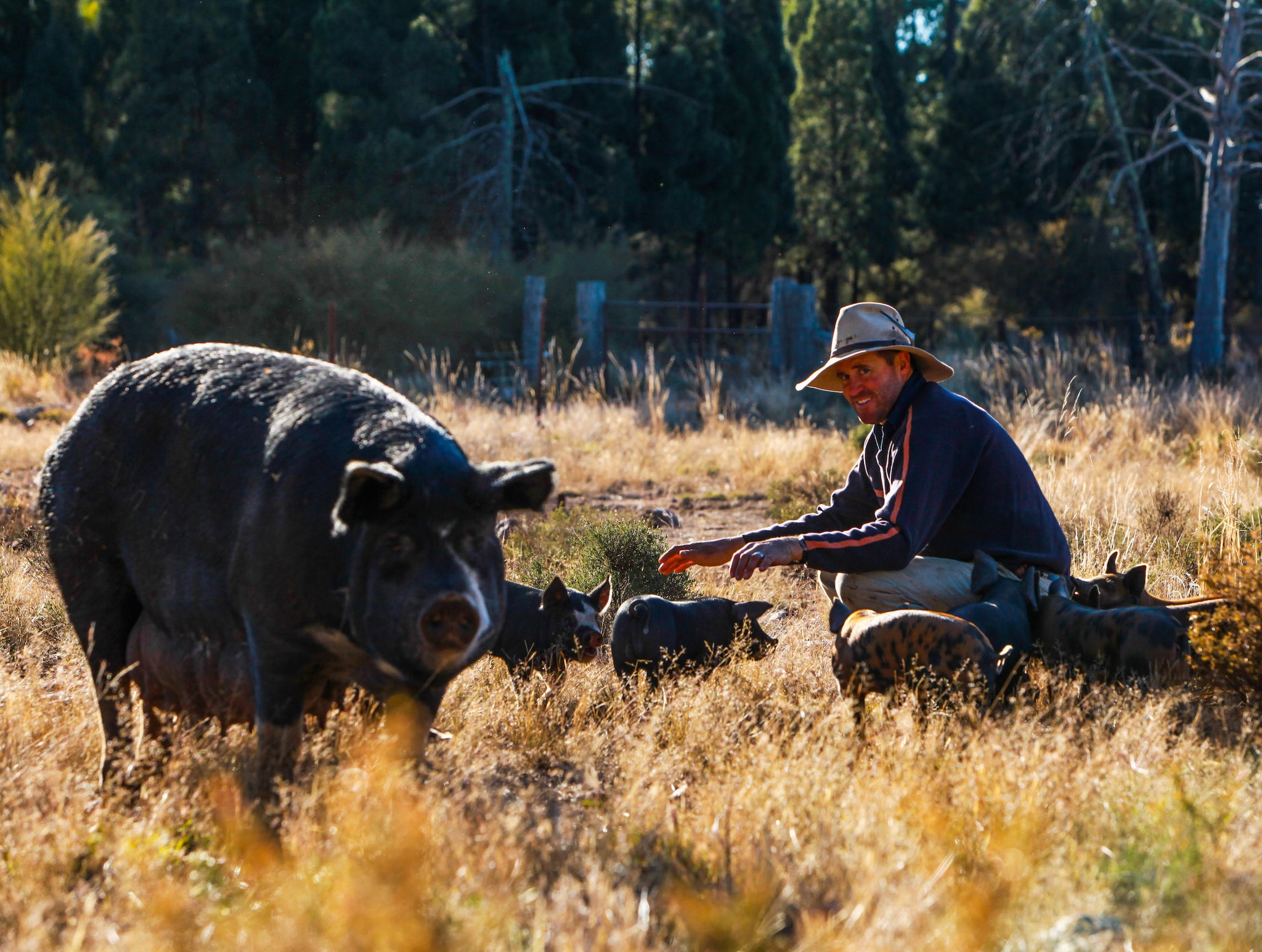 Drought report: Extraordinary Pork, November 2018