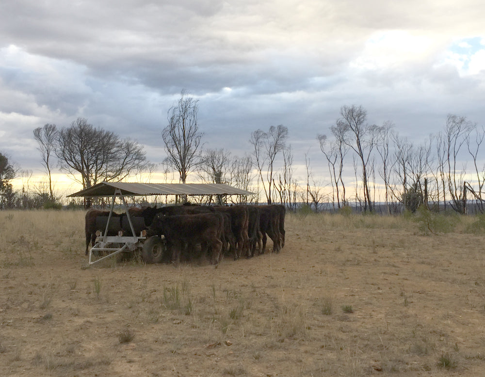 Going against the grain: fire, drought and grain-feeding at Gundooee