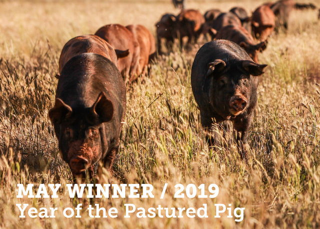 Pastured pig competition winners & African Swine flu...