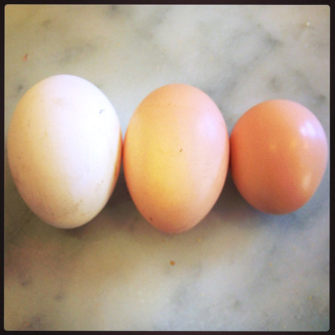 Marrickville chook eggs
