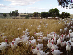Almond Grove summer turkeys