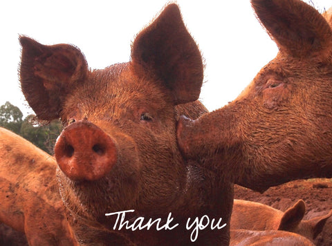 Wallendbeen pigs Thank you Thanksgiving
