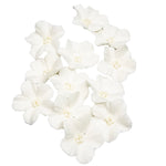 Sugar Blossoms - 12 pack- White