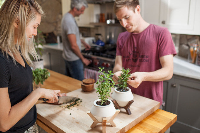 kitchen planters