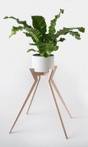 Xeno Pot Plant Holder
