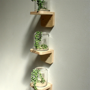 Birch Plant Shelves - Set of 3