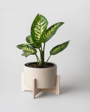 Cango Pot Plant Holder The