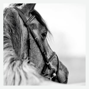 Horse wall art on canvas