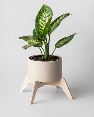 Bloukrans Pot Plant Holder