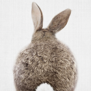 Baby Rabbit Tail Canvas Print