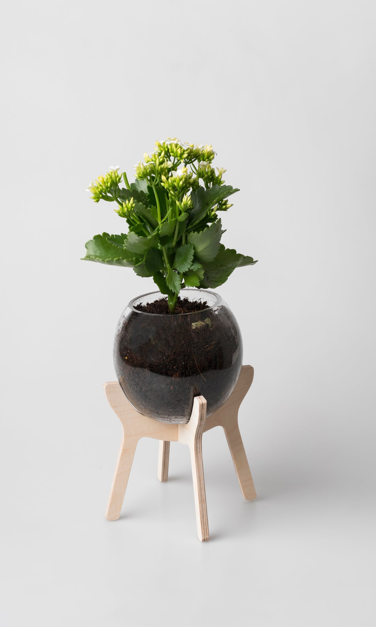 Poitjie Pot Plant Holder