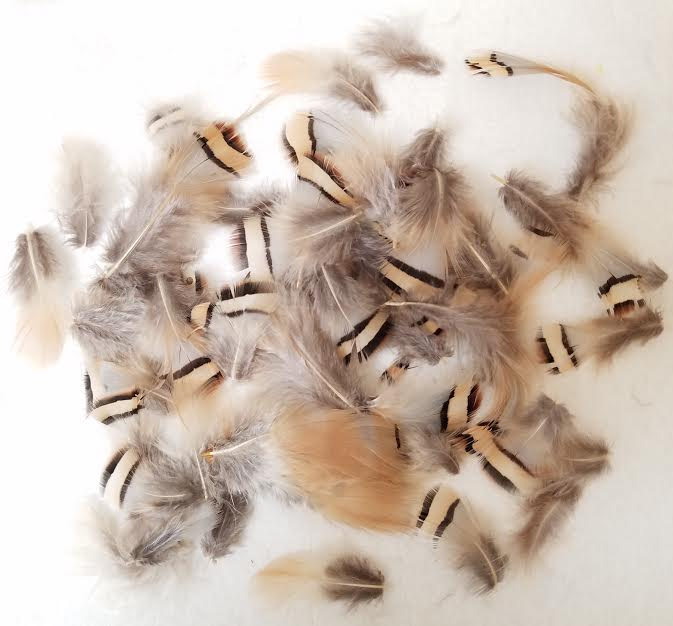 Partridge Plumage, Chukar Plumage, per 1/2 ounce
