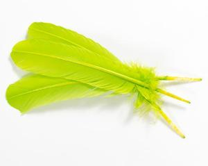 Apple Green Quill Feathers by the Pound