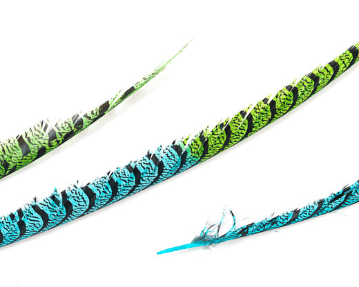 Aqua and Lime Zebra Pheasant Feathers 30 inches up, per 5 pieces