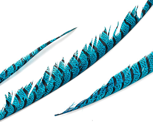 Aqua Zebra Pheasant Feathers 30 inches up, per 5 pieces