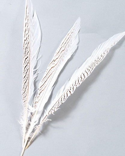 Silver Pheasant Feather 10-18 inches By The Piece
